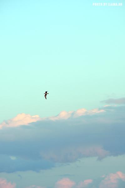 Небо, облака, чайка